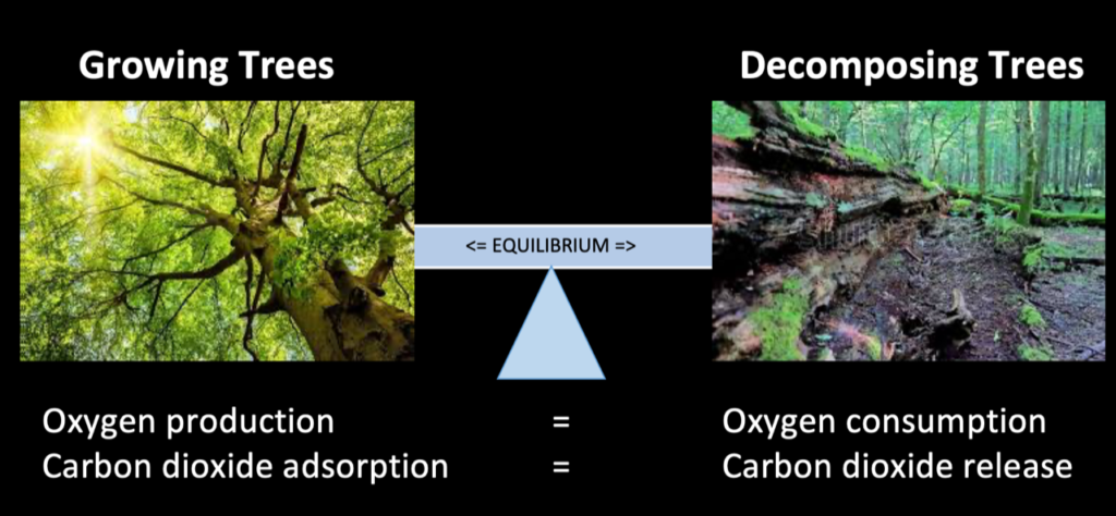 picture showing the equilibrium of CO2 consumption and production of trees