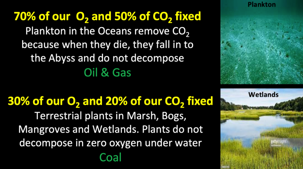 picture showing the CO2 absorption capacity and the O2 generation capacity of plankton and wetlands
